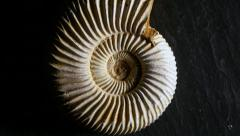 Fossil Ammonite, zoom in Stock Footage