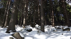 4k Winter and snow in german Harz mountain forest Stock Footage