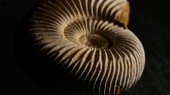 Fossil Ammonite, rotating, 4K, UHD Stock Footage