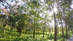 Green Rubber Trees with Latex in Thailand. Slow Motion Stock Footage