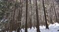 4k Deep snowy mountain forest Harz in winter 4k or 4k+ Resolution