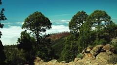 corona forestal Teide time lapse - stock footage