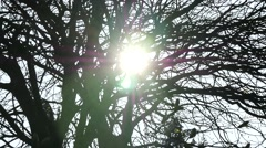 Sun through branches of bare tree, lots of flare Stock Footage