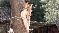 Animal skull bones on trees 2 - stock footage