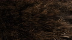 Animal fur close up, animal, decoration, detail, fluffy, hair. Stock Footage