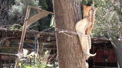 Animal skull bones on trees - stock footage