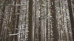 Stock Video Footage of 4k Deep snowy mountain forest Harz winter closeup