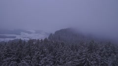 Cold snow covered forest birds view Stock Footage