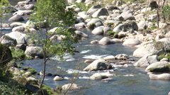 Small tree in front of river rapids Stock Footage