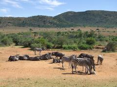 Zebras and Antelopes in Southafrica - stock photo