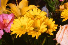 Yellow and Pink Floral Arrangement Stock Photos