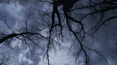 branches of huge trees are shaken by a strong wind darkly sky - stock footage