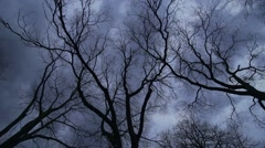 Huge trees are shaken by a strong wind and darkly sky Stock Footage