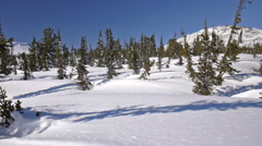 Sunny snow mountain fir-tree forest background. Slider shot. Stock Footage