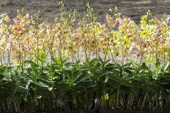 Orchid flowers in garden Stock Photos