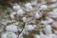 Inside The Snow Umbel - stock photo