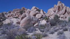 Pan Of Rocky Hiking Area In Desert- JTNP - stock footage