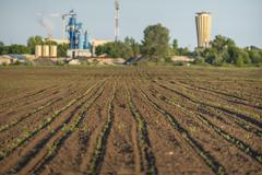 Cultivated land closeup - stock photo
