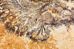A fossil fish from Solnhofen, Upper Jurassic of Southern Germany. Stock Photos