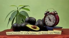 Still Life Avocado Stock Footage