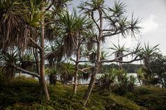 Tropical Island Flora - stock photo