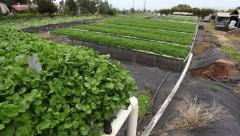Pan Watercress Farm - stock footage