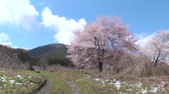Cherry blossoms in Azumino, Nagano Prefecture, Japan Stock Footage