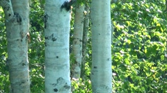 Green leaves, tree trunks Stock Footage