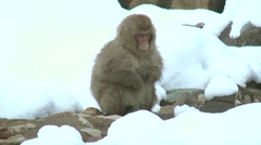 Monkeys at Jigokudani Monkey Park, Nagano Prefecture, Japan Stock Footage
