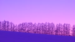 Trees in a snow field at sunset, Hokkaido, Japan Stock Footage