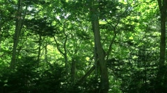 Green leaves Stock Footage