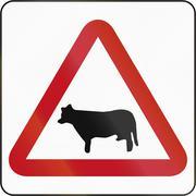 Cattle Crossing in Brunei - stock illustration