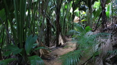 Vallee De Mai palm forest in Praslin Stock Footage