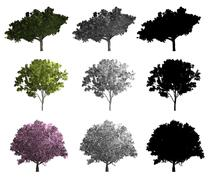 Rendering of three different kinds of trees Stock Illustration