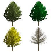 Stock Illustration of ginko biloba tree rendering showing four season