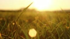 Insect sits on a blade of grass - stock footage