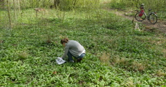 Woman picking wild garlic Stock Footage