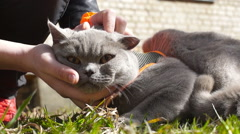 Iron offended funky gray cat (1) Stock Footage