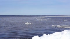 Gulls on ice floe in lake Stock Footage