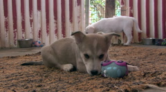 Sad little puppy dogs SPCA (Society for the Prevention of Cruelty to Animals) - stock footage