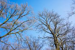 Bare branches of a tree against blue sky, nature spring background Stock Photos