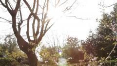 Lens Flare of Beautiful Sun Light Through Trees & Leaves Tilt - Back Garden Stock Footage
