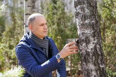 Man in woods collecting birch sap Stock Photos