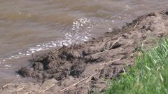 Muddy river bank Stock Footage