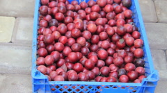 Cherry-plum yeild in box Stock Footage