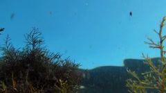Underwater flora and fauna Stock Footage