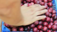 Red cherry-plum yeld Stock Footage