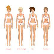 Female body types - stock illustration