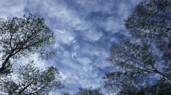 Trees and clouds moving in the sky Stock Footage