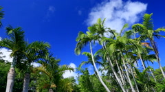 Palm trees and blue sky, Ogasawara Island, Japan Stock Footage